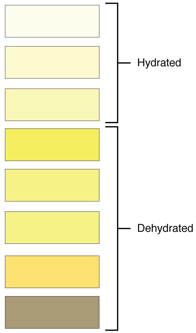 Hydration chart. Image description available.