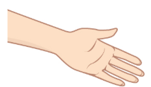 forearm and left hand