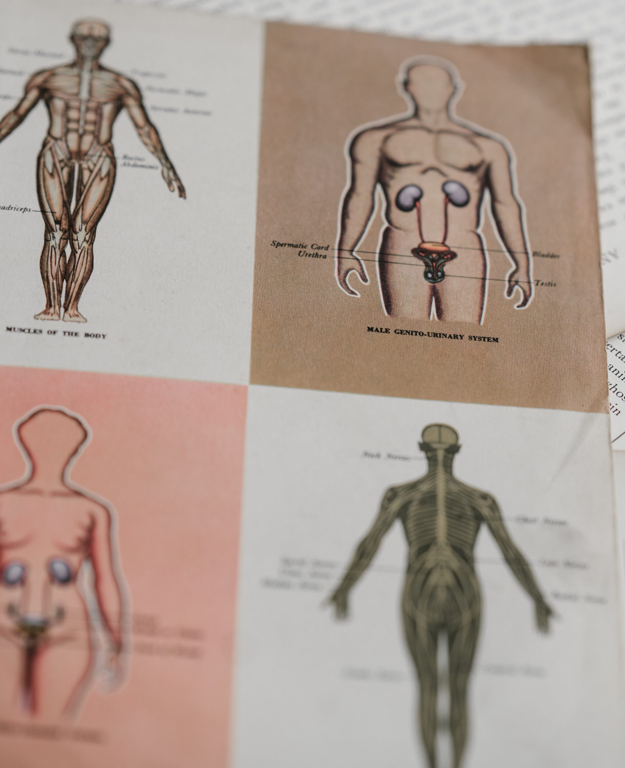 Cover image for Building a Medical Terminology Foundation